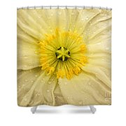 Rain Drenched Yellow Poppy Shower Curtain