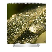 Rain Drop Shower Curtain