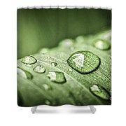 Rain Drops On Green Leaf Shower Curtain by Elena Elisseeva