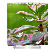 Raindrops On Sedum Shower Curtain