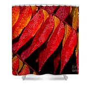 Rain Fall Color Shower Curtain