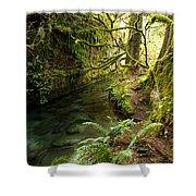 Rain Forest 2 Shower Curtain