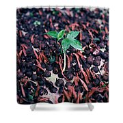 Rain Forest Seedling, Indonesia Shower Curtain