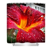Rain Kissed Lilly Profile 1 Shower Curtain