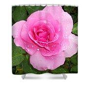 Rain Kissed Rose Shower Curtain