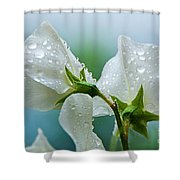 Rain On Sweet Peas Shower Curtain
