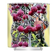 Rain On The Crab Apples Shower Curtain