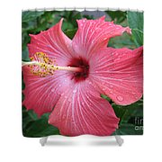 Rain Soaked Hibiscus Shower Curtain