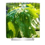 Rain Soaked Leaf Shower Curtain