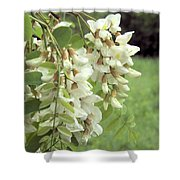 Rain-spangled Locust Flowers Shower Curtain