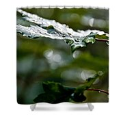 Rain Sparkles Shower Curtain