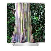 Rainbow Eucalyptus 3 Shower Curtain