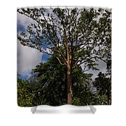 Rainbow Eucalyptus - Tall Proud And Beautiful Shower Curtain