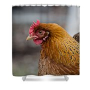 Rainbow Hen Shower Curtain