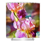 Rainbow Irises Shower Curtain