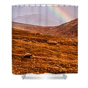 Rainbow Over Grizzly In Denali Shower Curtain