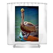 Rainbow Pelican Shower Curtain