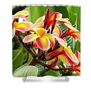 Rainbow Plumeria - 1 Shower Curtain