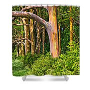 Rainbow Row - Eucalyptus Trees Of Maui Shower Curtain