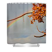 Rainbow Through Tree Shower Curtain