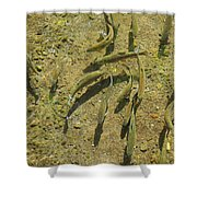 Rainbow Trout Art Prints Fish Fishing Fishermen Shower Curtain