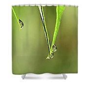 Raindrop Reflection Shower Curtain