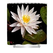 Raindrop Water Lilly Shower Curtain