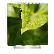 Raindrops Shower Curtain