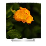 Raindrops On A Yellow Rose Shower Curtain