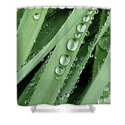 Raindrops On Blades Of Grass Shower Curtain