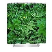 Raindrops On Buttercups Ranunculus Shower Curtain