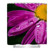 Raindrops On Daisies Shower Curtain