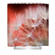 Raindrops On Dandelion Red Shower Curtain