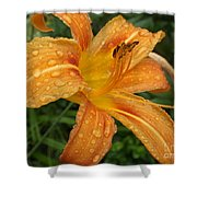 Raindrops On Golden Lily Shower Curtain