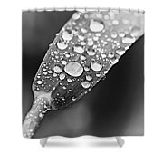 Raindrops On Grass In Black And White Shower Curtain