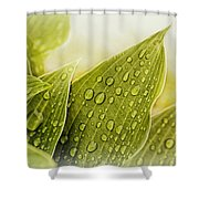 Raindrops On Hostas Shower Curtain