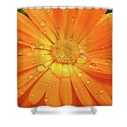 Raindrops On Orange Daisy Flower Shower Curtain