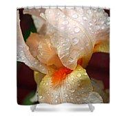 Raindrops On Orange Iris Shower Curtain