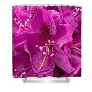 Raindrops On Pink Petals Shower Curtain