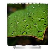 Raindrops On Plumeria Leaf Shower Curtain