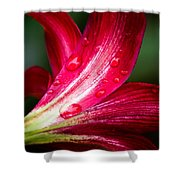 Raindrops On Red Petals Shower Curtain