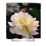 Raindrops On Rose Petals Shower Curtain