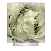 Raindrops On White Rose Shower Curtain