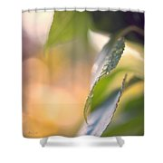 Raindrops Three Shower Curtain