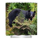 Rainforest Black Bear Shower Curtain