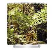 Rainforest Color Shower Curtain