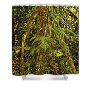 Rainforest Colors Shower Curtain