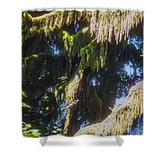 Rainforest Cover Shower Curtain