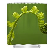 Rainforest Fern Unfurling Sabah Borneo Shower Curtain