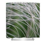 Rainforest Palm Tree Leaf Close Up  Shower Curtain
